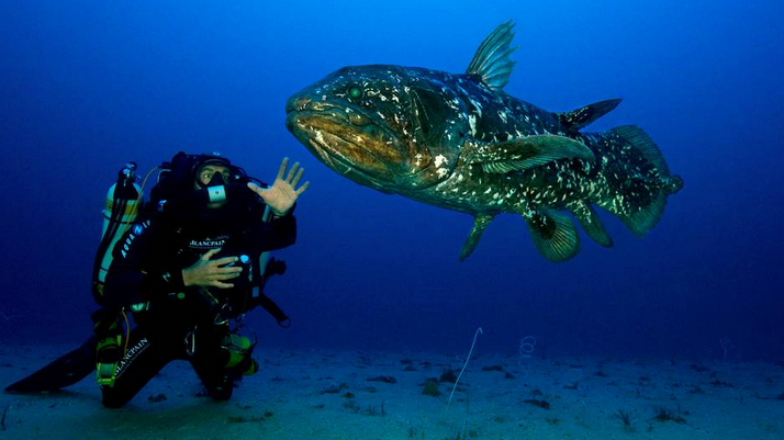 Le Coelacanthe – Plongez vers nos origines avec Laurent Ballesta !