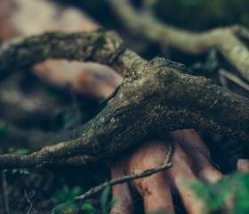 Racines | Chapitre 2 : La Terre