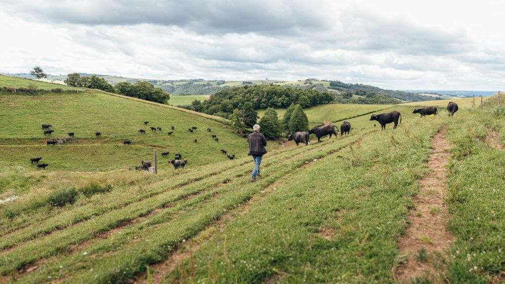 Agriculteurs Aveyronnais - Francis Bony Les Bufflonnes - Franck Tourneret Photographe