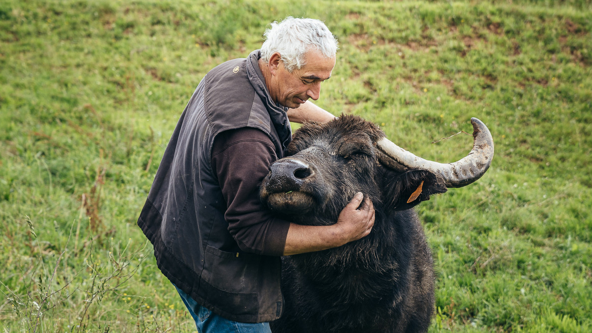 Les Bufflonnes de Francis Bony